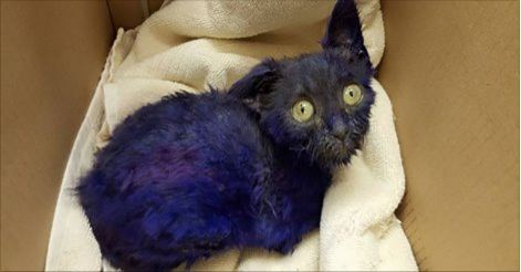 Kitten Dyed in Purple Rescued After Living as a Live Chew Toy