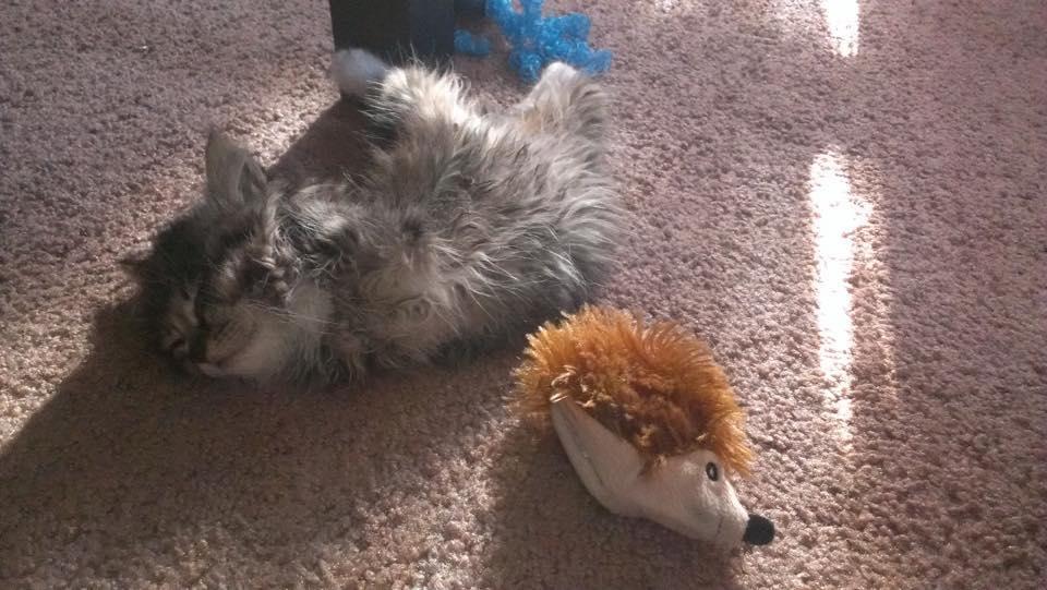 two-legged kitten, panccake
