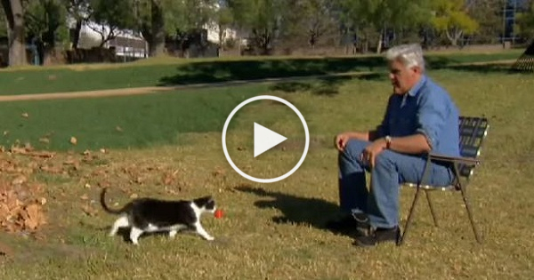 Jay Leno Cats Are Smarter Than Dogs