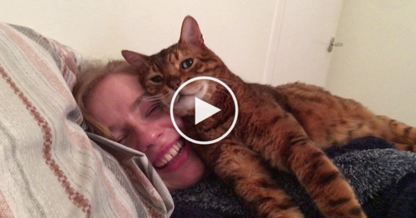 This Cat Approves His Human Daddy`s New Girlfriend. Marriage is near..