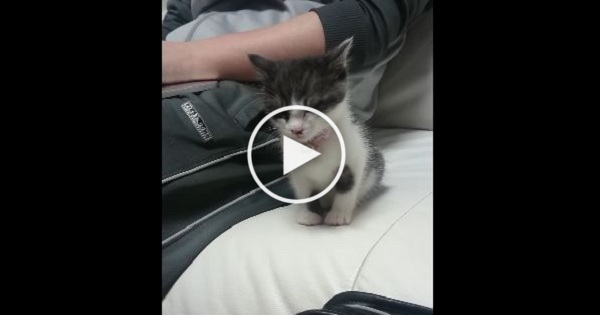 Cute Kitten Didn`t Want To Sleep Alone, So Look What He Did.