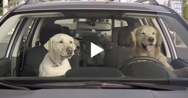 This Would Probably Happen If Dogs Could Drive Cars I M