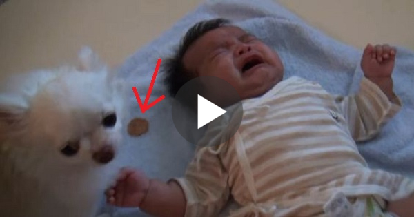 Smart Dog Gives His Cookie To Crying Baby To Calm It Down