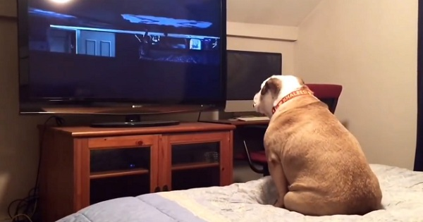 Dog Watching A Horror Movie Reacts In The Most Amazing