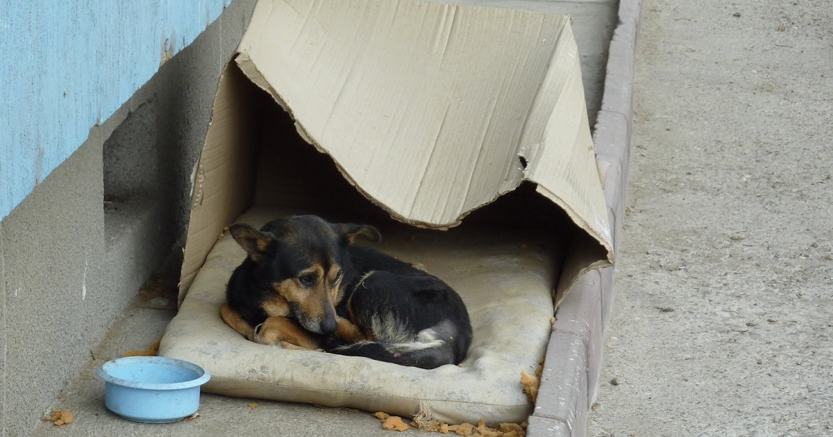 touching transformation of a rescued homeless dog living in a cardboard box. Black Bedroom Furniture Sets. Home Design Ideas
