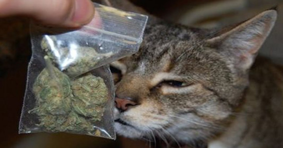 Smart Cat Brought Home A Bag Of Weed Worth 150 Dollars